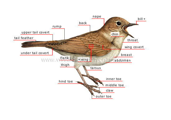 morphology of a bird [1]
