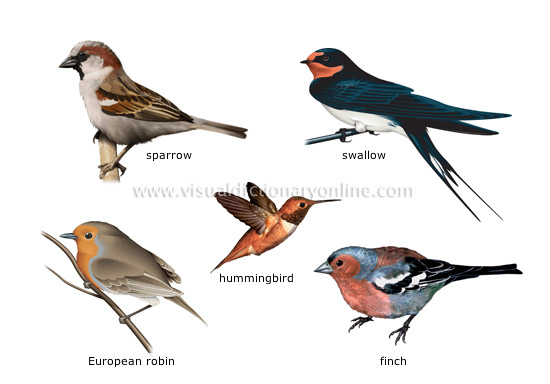 examples of birds [1] - Visual Dictionary Online