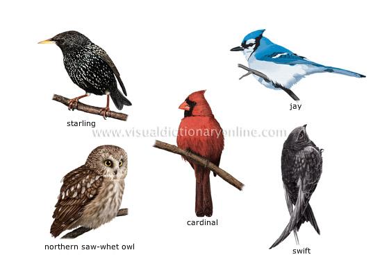 examples of birds 1