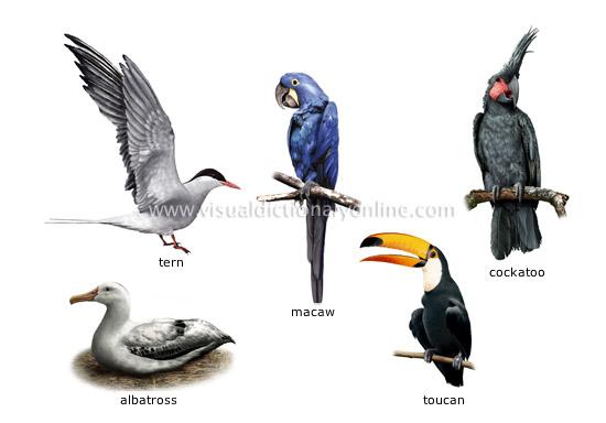 Examples Birds 5
