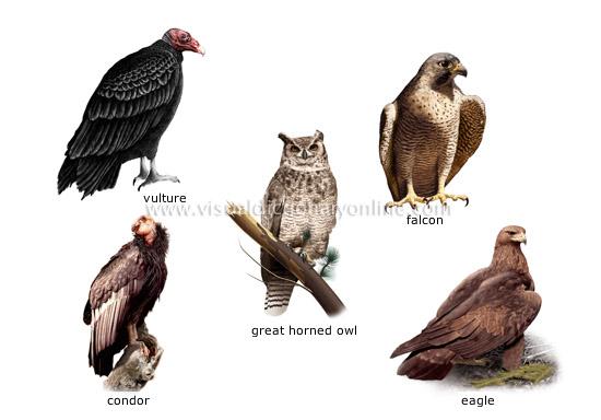 Examples Birds 6