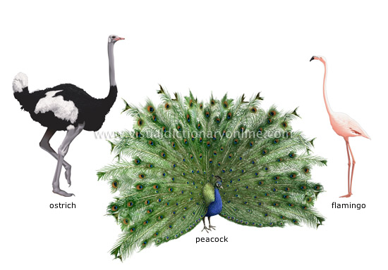 Animal Kingdom Birds Examples Of Birds 8 Image Visual