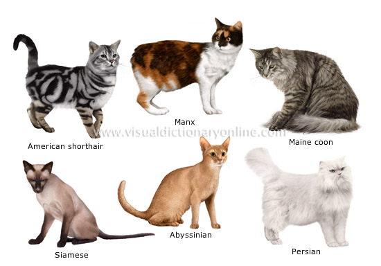 hair (short, medium-long or long). cat breeds
