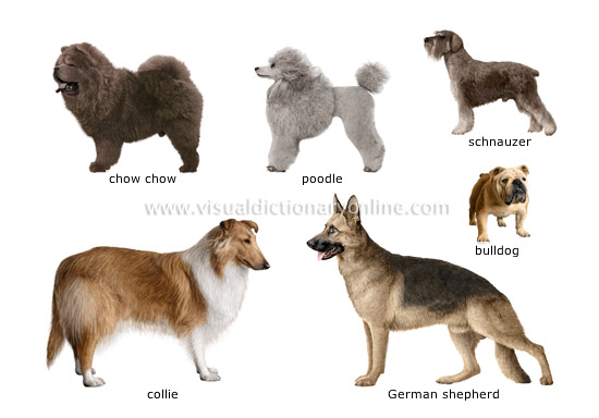 Find all kinds of pet dog information including dog care, dog breed info,