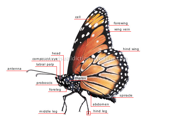 morphology of a butterfly [1]