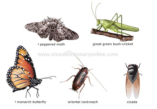 examples of insects  2  Insect