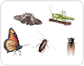 examples of insects [2]