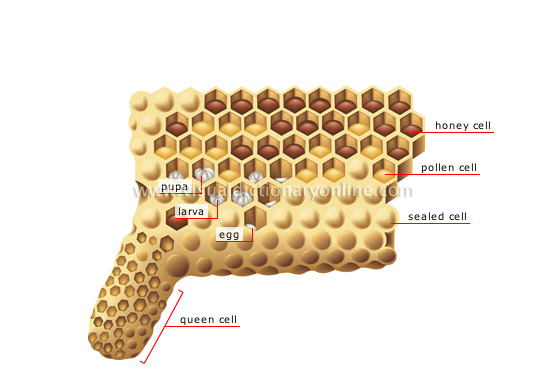 honeycomb section