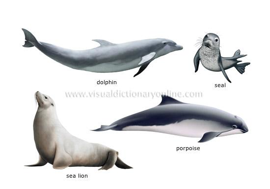 Marine mammals pictures - photo#2