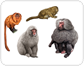 examples of primates [1]