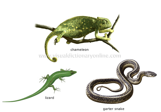 examples of reptiles  ...