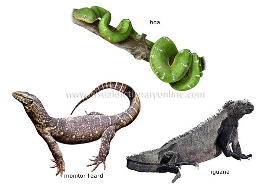 ANIMAL KINGDOM :: REPTILES :: EXAMPLES OF REPTILES [3] image ...