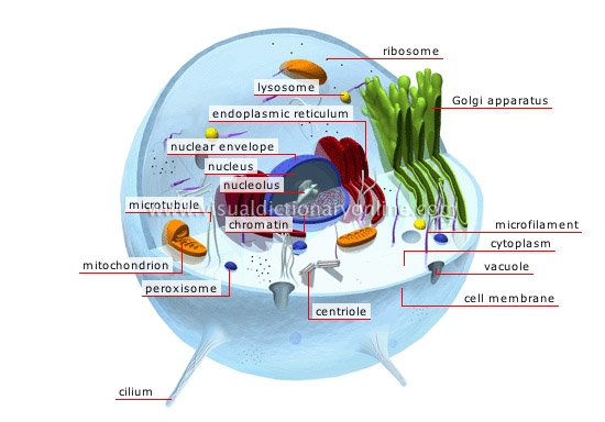 animal cell image