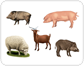 examples of ungulate mammals [1]