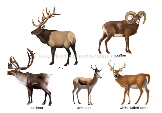 examples of ungulate mammals [2]