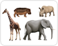 examples of ungulate mammals [6]
