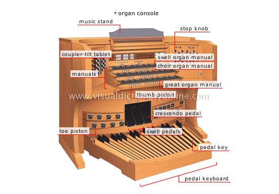 organ[1]