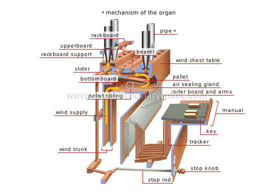 organ[4]