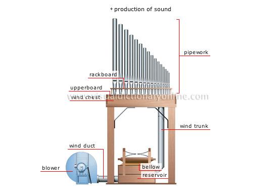 organ[5]
