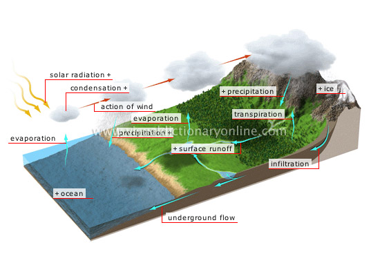 hydrologic cycle - Visual Dictionary Online