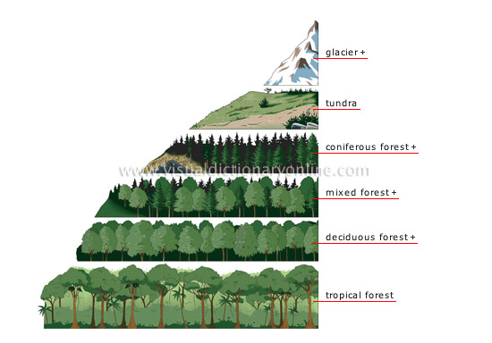 elevation zones and vegetation