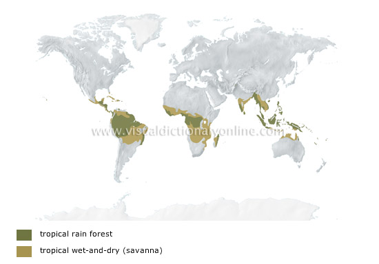 EARTH :: METEOROLOGY :: CLIMATES OF THE WORLD :: TROPICAL ...