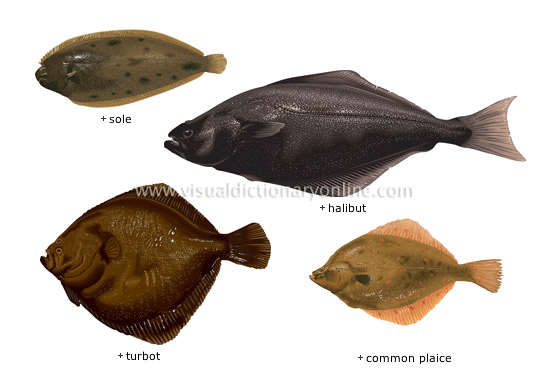 food kitchen food bony fishes 7 image visual