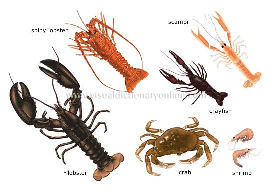 external image crustaceans.jpg