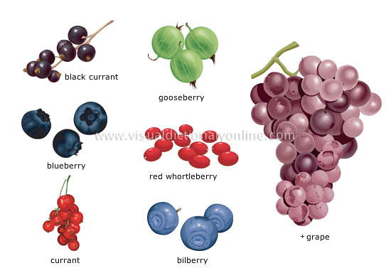 how to say berry in spanish