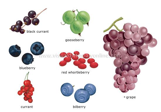 food kitchen food fruits berries 1 image visual