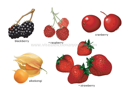 berries [2] - Visual Dictionary Online