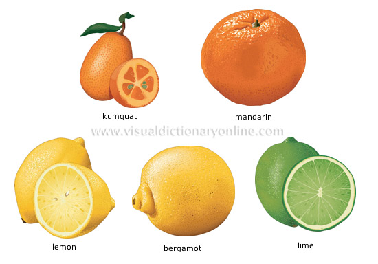 citrus fruits [1]