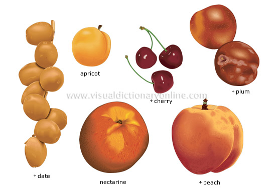 stone fruits - Visual Dictionary Online