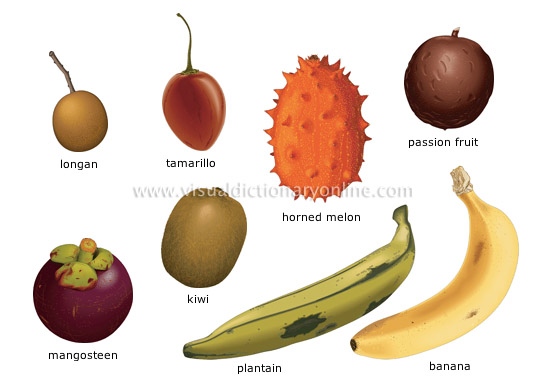 tropical fruits [1] - Visual Dictionary Online