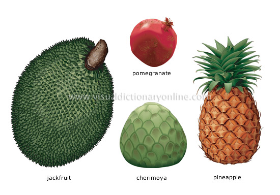 Exotic Fruit Names Rel...