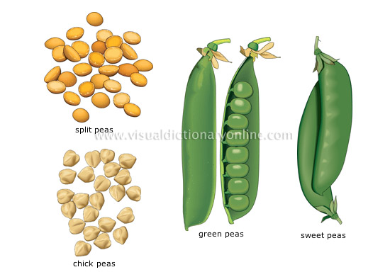 peas - Visual Dictionary Online