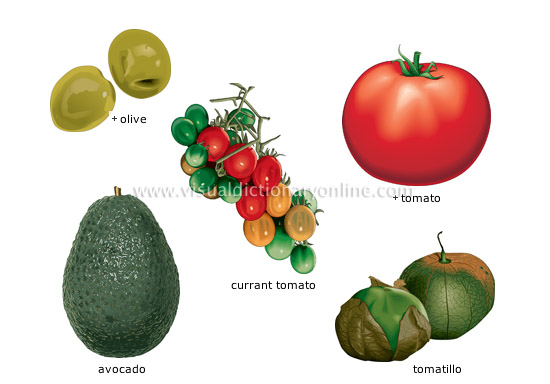 fruit vegetables [1] - Visual Dictionary Online
