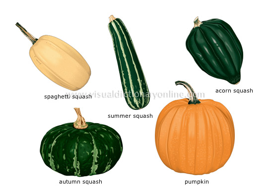 fruit vegetables [5] - Visual Dictionary Online