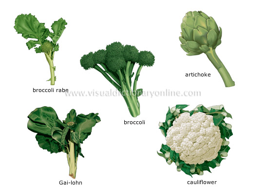 The flowers or flower buds of edible plants eaten as vegetables.