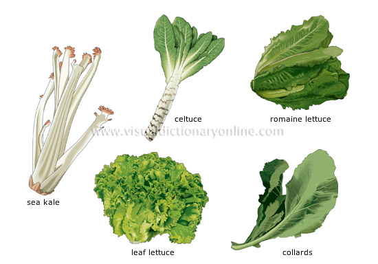 Examples Of Plants That Store Food In Their Leaves