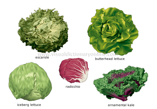 leaf vegetables [2] - Visual Dictionary Online