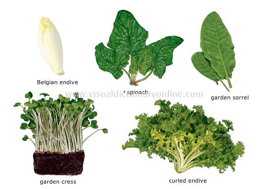 List of leaf vegetables - Wikipedia