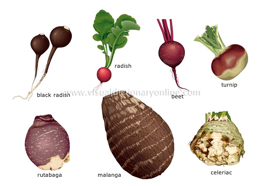 FOOD & KITCHEN :: FOOD :: VEGETABLES :: ROOT VEGETABLES [2 ...
