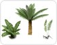 examples%20of%20ferns