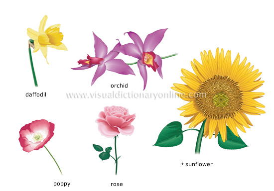 examples of flowers [2]