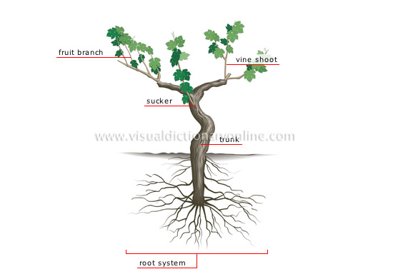stem and branches relationship help