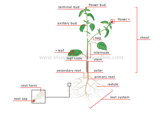 Structure of a plant image