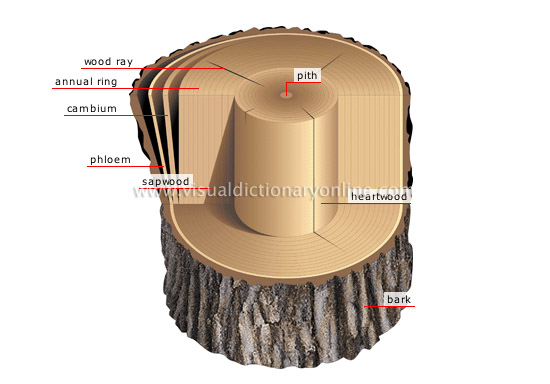 plants & gardening :: plants :: tree :: cross section of a ... diagram of life cycle of orange tree diagram of tree trunk