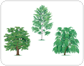 examples of broadleaved trees [1]