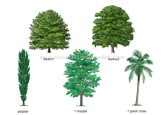 examples of broadleaved trees [2]